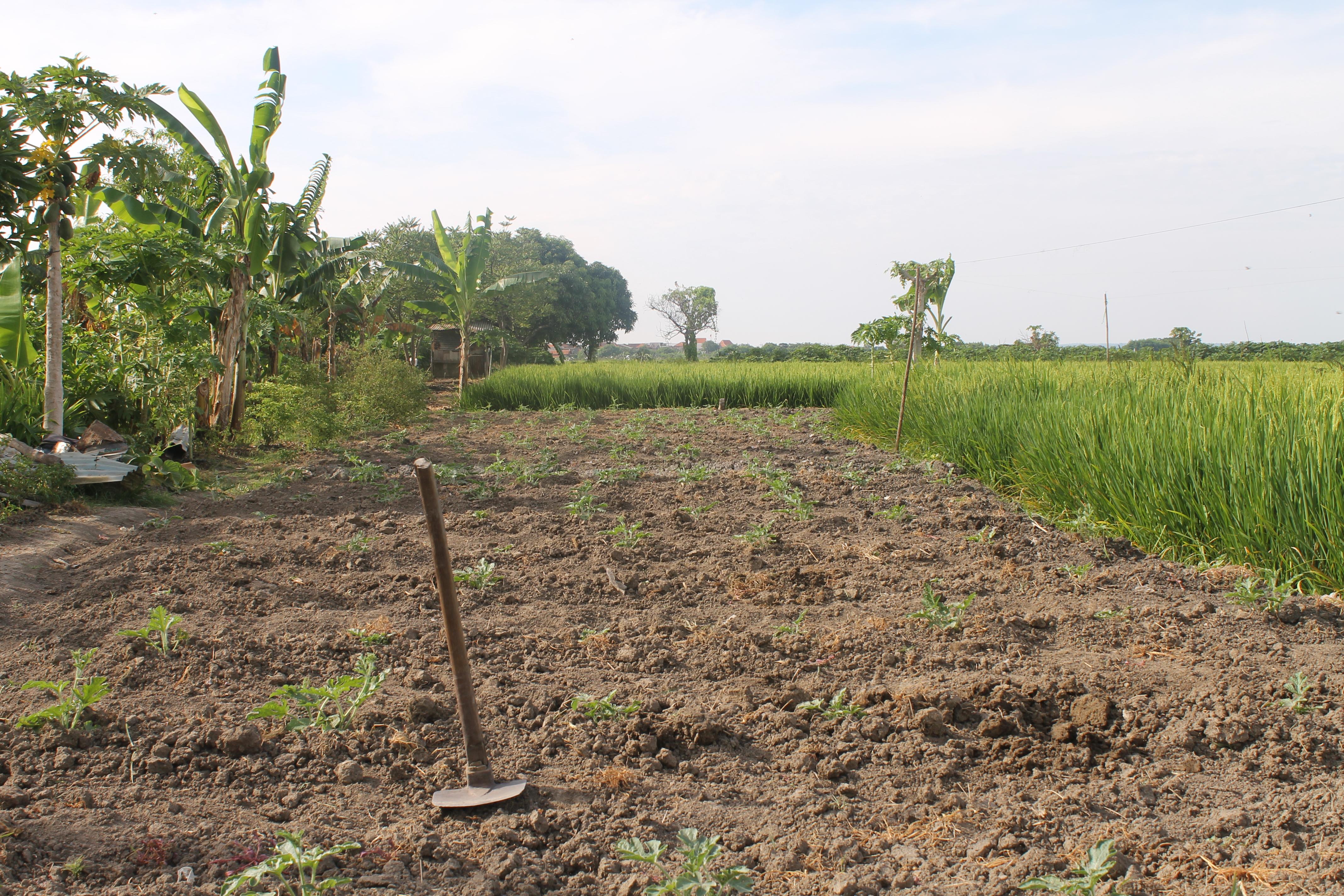 Pertanian Dataran Rendah Justmaulz